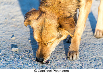 Red dog eats on the ground