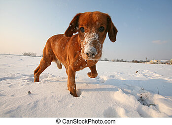 Red dog on snow in sunny day