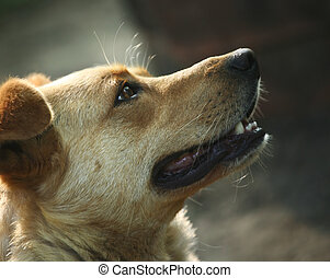 Red dog - Muzzle of a not purebred red dog close-up