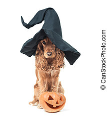 dog sitting in a witches hat and looks impressive - red dog...