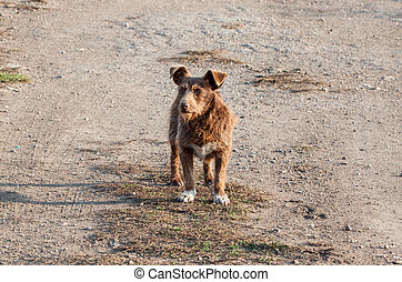 Red dog standing on the road.