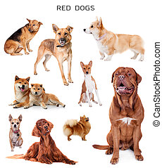 Red dogs set