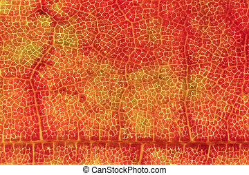 Red Dry Leaf Texture. Macro Closeup. Natural Organic Background. Transparent Floral Pattern.