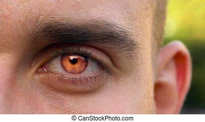 Red eye of vampire looks straight into the camera. Halloween...