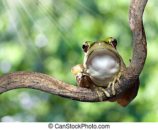 red eye tree frog on nature background