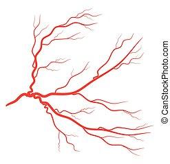 red eye vein vector symbol icon design. Beautiful illustration isolated on white background