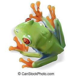Red-eyed Tree Frog (Agalychnis callidryas) - Colored...