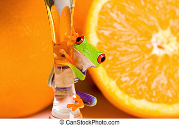 Red Eyed Tree Frog and fresh fruit - A red eyed tree frog...
