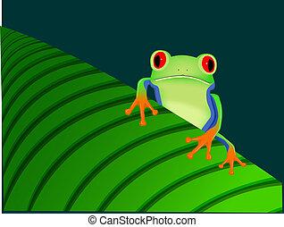 Red eyed tree frog sitting on leaf