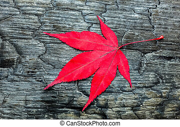 Red fall maple leave on black burnt wood