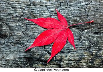 Red fall maple leave on black burnt wood