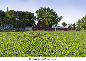 red farm and green fields