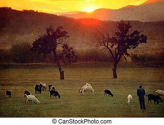 red farmland meadows