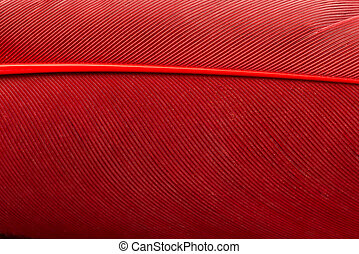 Red feather close up