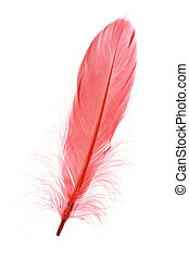 Red Feather with white background