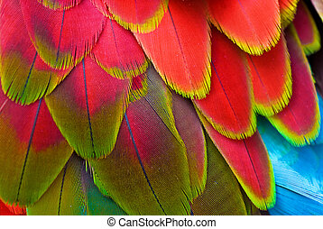 Red Feathers, Macaw - Brilliant Red and blue back and wing...