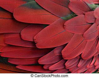 Red Feathers - Macro photograph of the red feathers of a ...