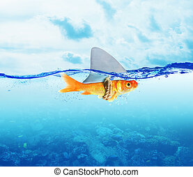 Red Fish as shark - Fish disguised as shark in the sea