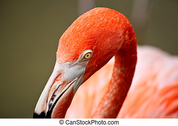 red flamingo in a park in Florida