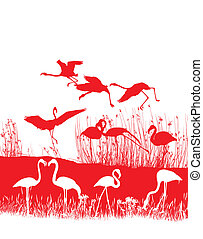 Red flamingos on the shore