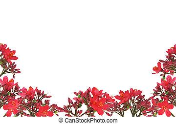 Red floral design border