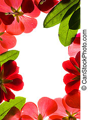 Red Floral Frame Isolated On White
