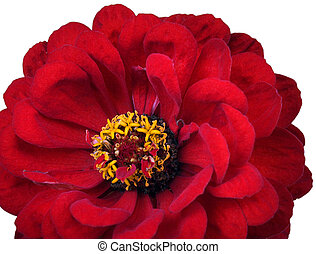 Red flower (1)
