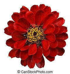 Red flower (4)