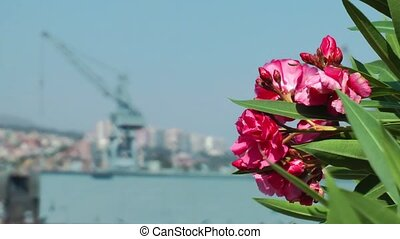 Red Flower and war ship