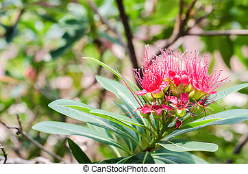 Red flower blooming