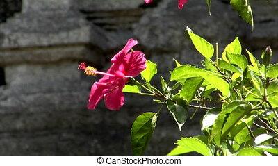 red flower blur background