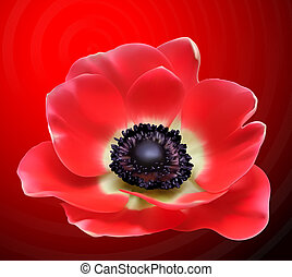 Red flower design. Poppy vector illustration