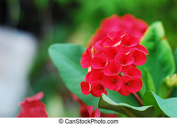 Red flower in garden