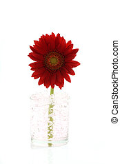Red flower isolated in white background