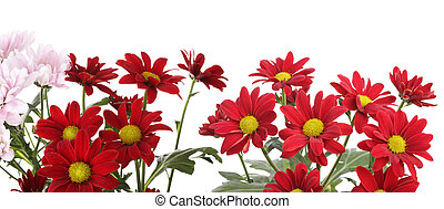 Red flower isolated on white.