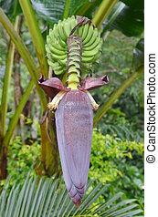 Red flower of a banana against green leaves