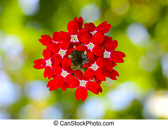 red flower on a blurred background