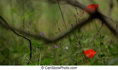 red flower on a green background. Gentle wildflowers, wildlife. Field with wildflowers and green grass.