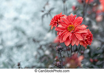 red flower on a light background