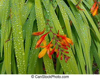 Red Flower on Blades of Leaves with Dew Drops