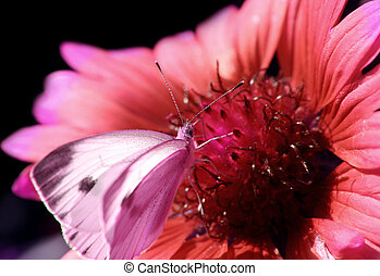 Red flower with a butterfly
