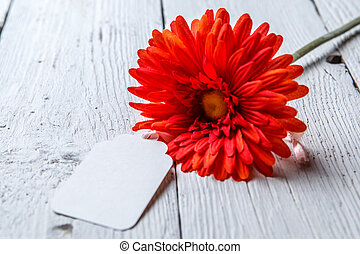 Red flower with blank paper