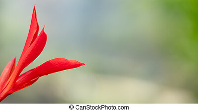 Red Flower with Blurred Background Banner