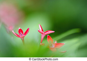 red flower with green leafs