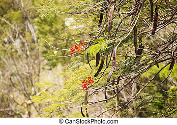 Red Flowers and Pods in Tropical Tree