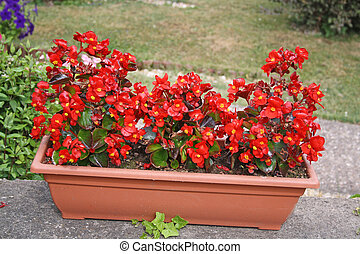 red flowers in a planter