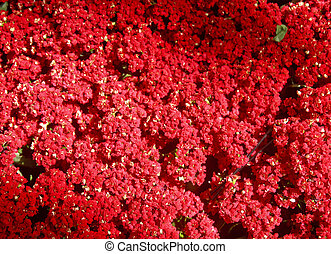 Red Flowers in Dappled Shade