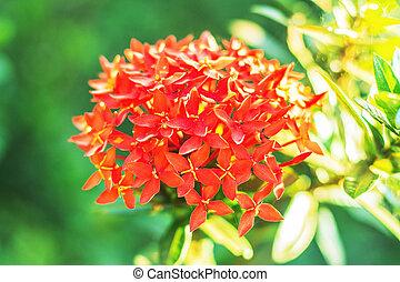 Red flowers in garden.