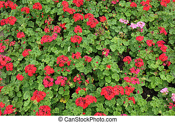 red flowers in green garden