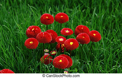red flowers in green grass